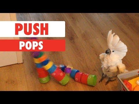 Push Pops