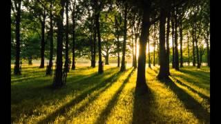 Ludovico Einaudi - Two Trees (John O'Callaghan Remix)