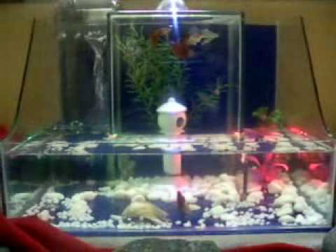 Mini upside down tank guppies youtube for Inverted fish tank