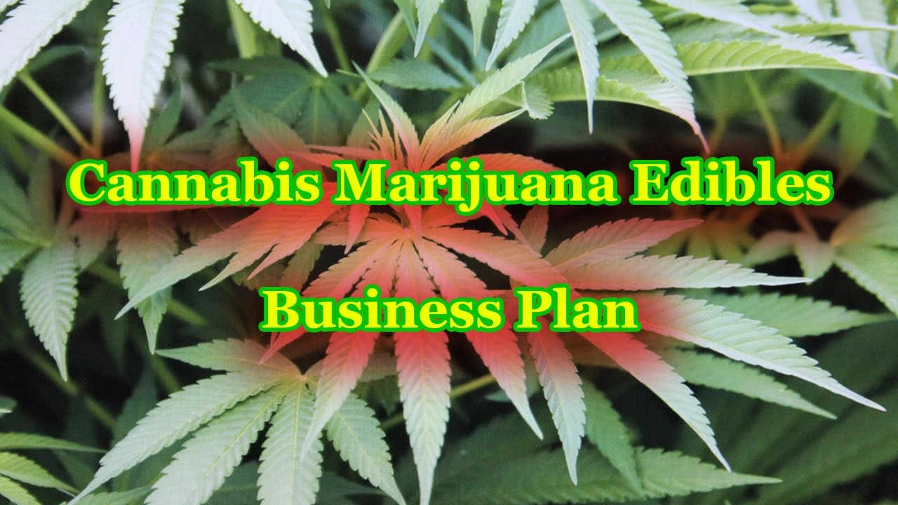 cannabis marijuana edibles company business plan template