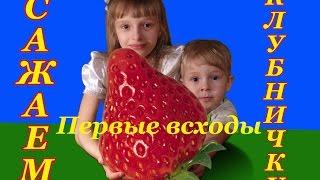 Соня и Костя сажают землянику (клубнику) strawberry - Первые всходы(Соня и Костя занимаются посадкой, они решили развести землянику (клубнику) strawberry, которая будет плодоносить..., 2016-03-24T18:37:45.000Z)