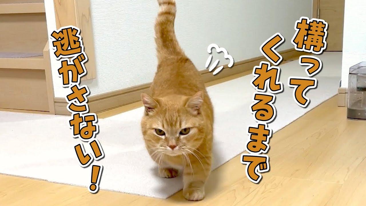 構ってほしくてひたすらくっついてくる猫から逃れられない!?