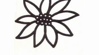 Bible Cartoon Drawing - Poinsettia