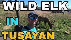 City of Tusayan Tour Near The Grand Canyon #Vanlife Plus Wild Elk