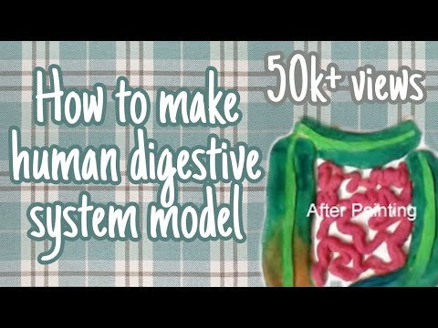 how to make working model of digestive system