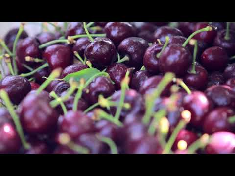 Orchard Fruit Co. - Proceso de producción de las cerezas