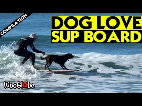 Dog Living Perfect Life Practicing Surfing | Dog Surfing Compilation