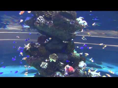 Relaxing music relaxing nature scenes best aquarium fish for Fish tank full movie