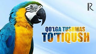 Qo'lga tushmas to'tiqush (o'zbek film) | Кулга тушмас тутикуш (узбекфильм) 2016