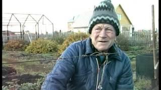 Укрытие винограда на зиму(Агат Донской очень неприхотлив, один год он у меня зимовал без какого-либо укрытия и не вымерз. Лозу я связыв..., 2016-02-06T11:13:52.000Z)