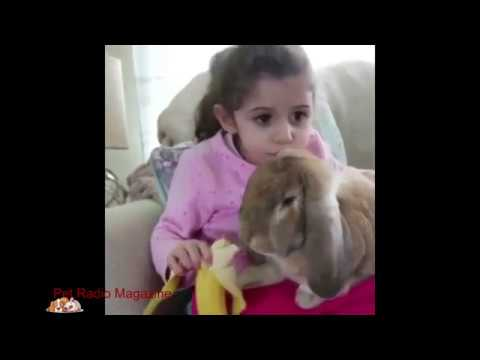 Cutest Bunnies of Instagram