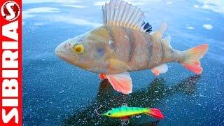 Самый уловистый БАЛАНСИР #5 Лаки Джон в деле Подводная проверка Lucky John на зимней рыбалке