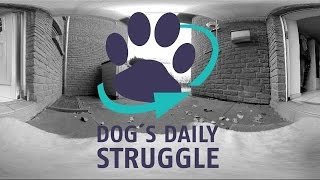 Dog's Daily Struggle - A 360 VR Spatial Audio Experience [English Version]