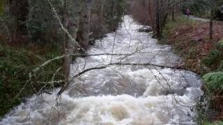Ashland Creek Raging~02-10-17
