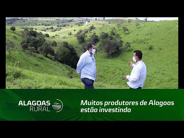 Muitos produtores de Alagoas estão investindo no sistema voisin
