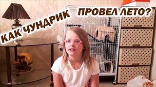 ПОКУПКИ ДЛЯ ШИНШИЛЛЫ - Содержание шиншиллы - Уход за шиншиллой