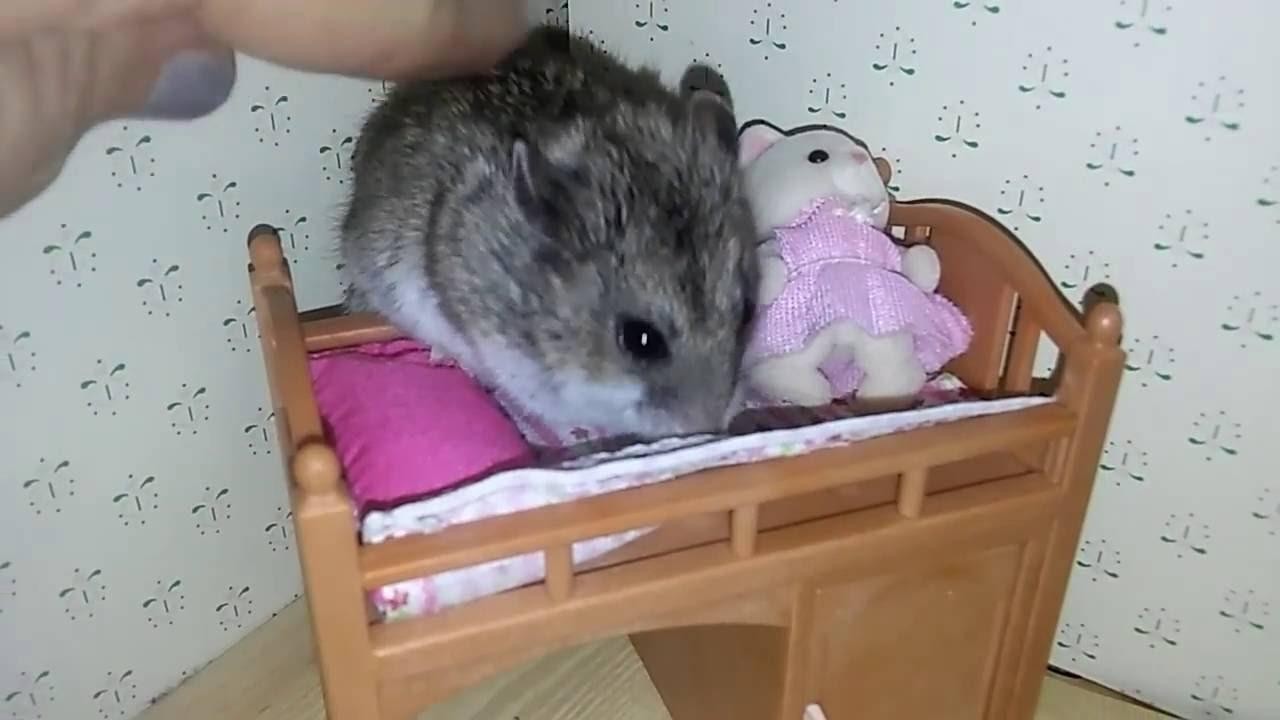 Tiny Bed tiny hamster in a tiny bed - youtube