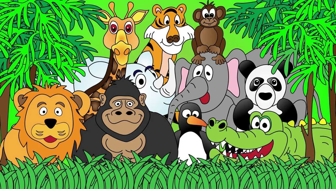 Image result for zoo animals