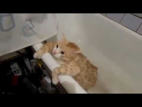 Жирные коты в ванной