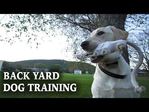 Training A Hunting Dog | Backyard Dog Training