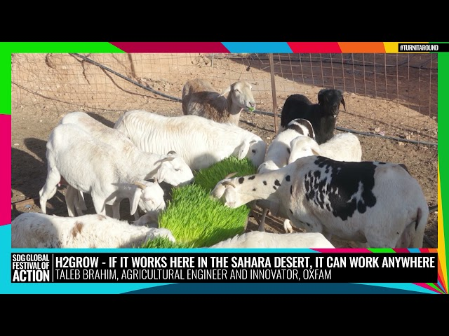 H2Grow - If it works here in the Sahara desert, it can work anywhere (Spanish)