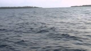 Рыбалка на Мальдивах 2.MTS(, 2011-07-10T14:51:13.000Z)