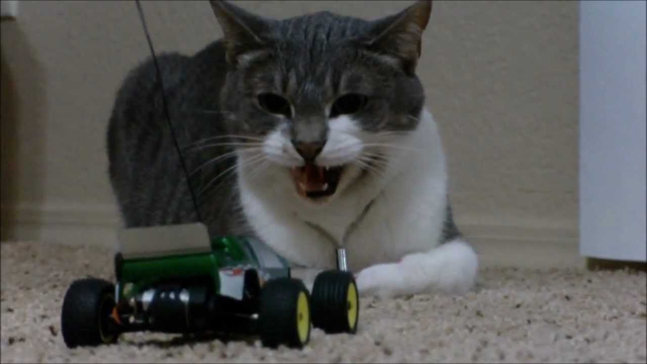 Cat Vs Losi Micro T Rc Car Youtube