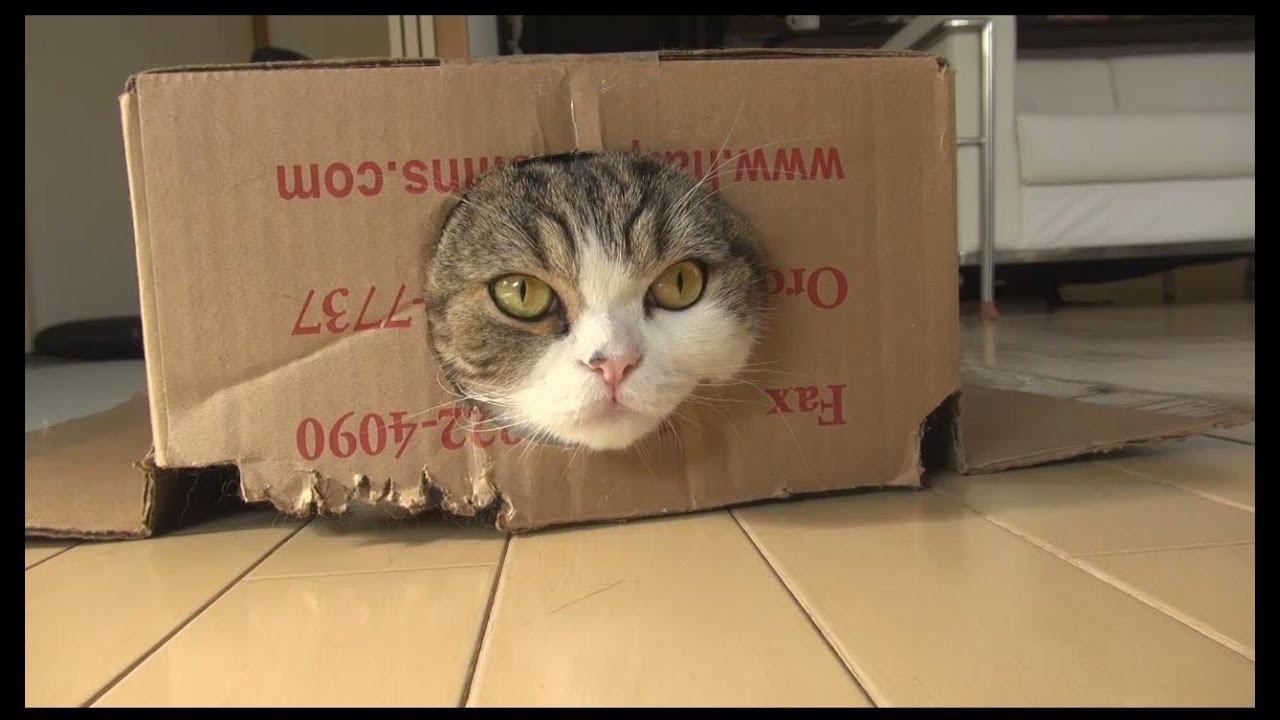 I Want A Cat Like Maru