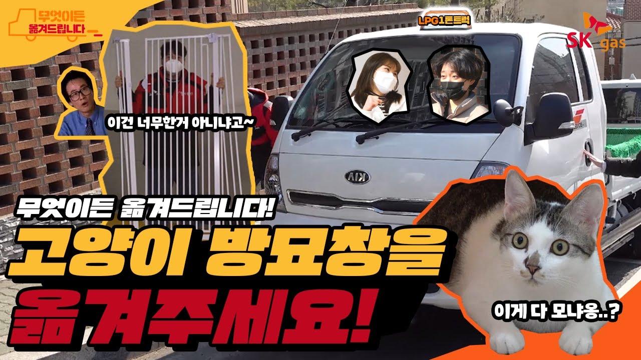 임시보호 고양이를 위한 방묘창을 옮겨주세요!!!ㅣ무엇이든 옮겨드립니다 EP.02