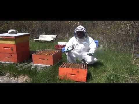 Download Youtube: Splitting Beehive in Springtime  Part I