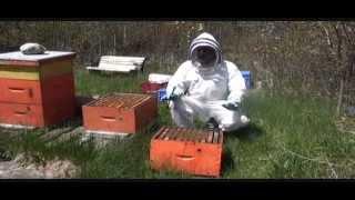 Splitting Beehive in Springtime  Part I