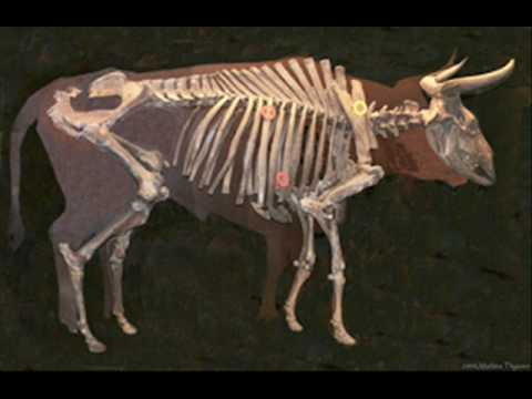 Extinct and Very Rare Animals 4