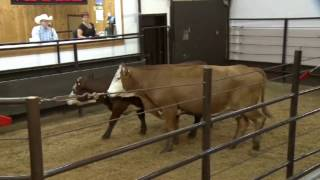 Sale Day - Livestock Handling Practices for Marketing Centre Staff