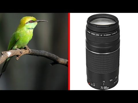 Canon EF 75-300mm f4-5.6 Hands on and Sample