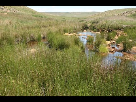 Local Action for Biodiversity: Wetlands South Africa (full version)