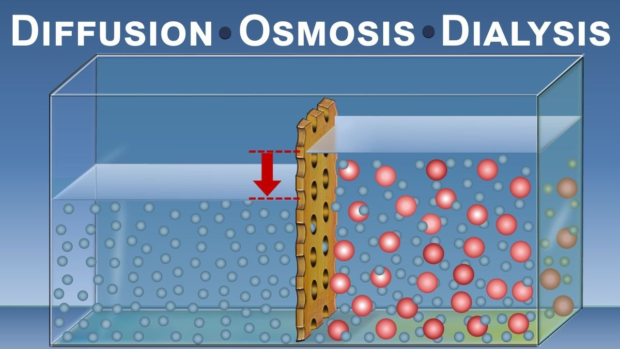 the osmosis and diffusion report Lab 4 diffusion and osmosis solute, solvent, concentration gradient, diffusion, differentially permeable membrane, equilibrium, osmosis, osmotic pressure, hypotonic, hypertonic, isotonic, dialysis write a scientific lab report.