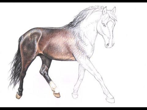 Wie zeichne ich ein Pferd – How to draw a horse