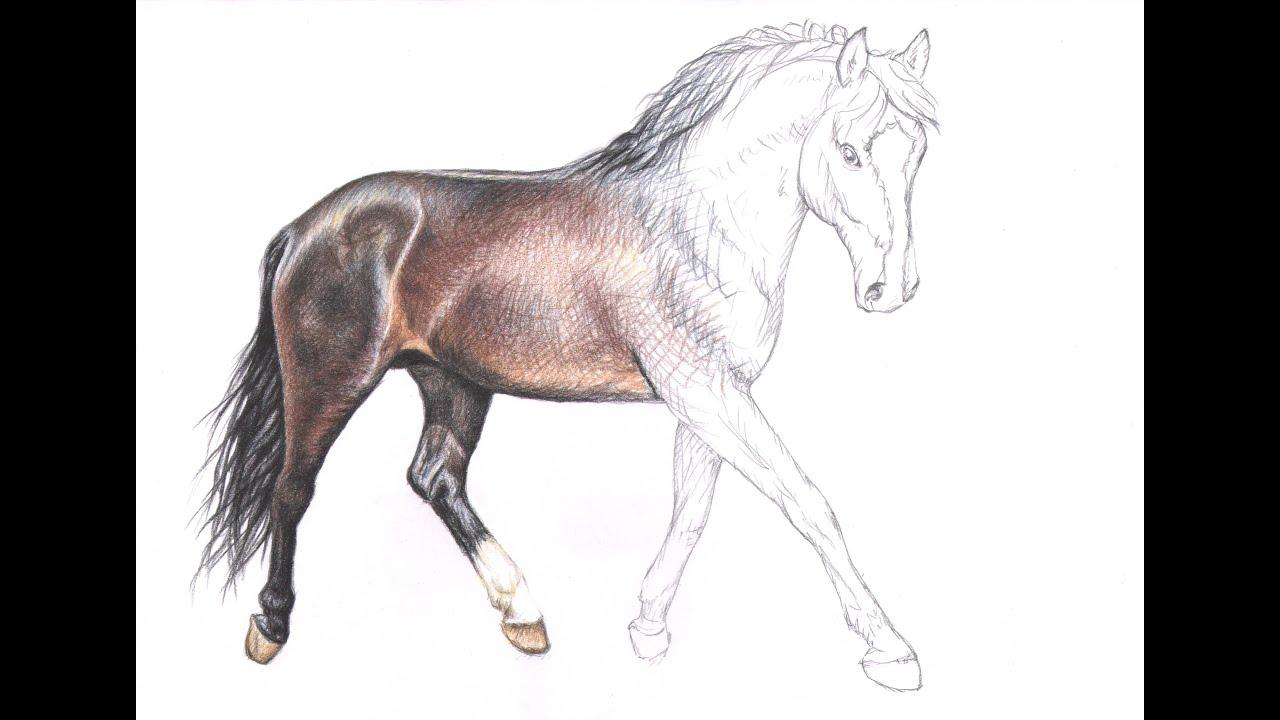 wie zeichne ich ein pferd how to draw a horse youtube. Black Bedroom Furniture Sets. Home Design Ideas