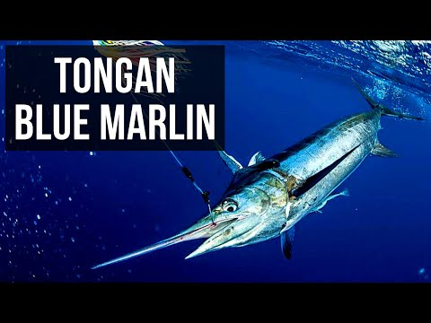 Tongan Blue Marlin with Steve Campbell (Season 4 Ep 3)