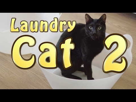 N2 the Talking Cat S4 Ep24 - Laundry Cat 2