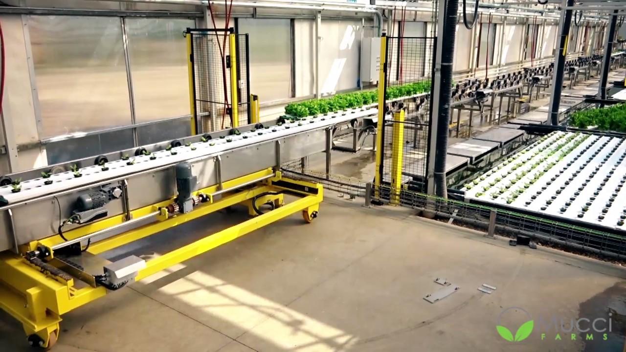 Viscon Hydroponics Fully Automated Hydroponics System
