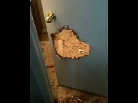 Dog Destroys Bathroom Door Youtube
