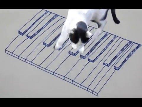 Koty pianisty