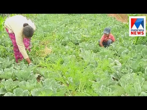 Horticorp to procurement vegetables| Manorama News