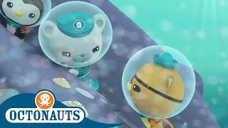 Octonauts - Underwater Stories Compilation | Cartoons for Kids | Underwater Sea Education