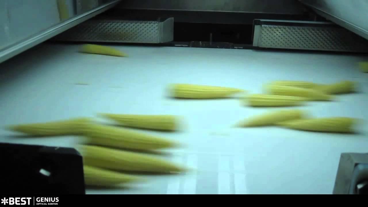 Baby corn sorter Genius - TOMRA Sorting