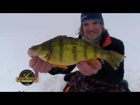 Ice Fishing for Jumbo Yellow Perch in Manitoba - Manitoba Master Angler Minute
