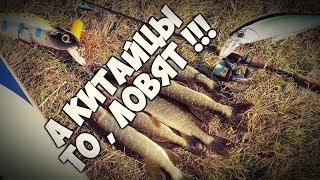 Риболовля на китайські воблери . Спонтанне відео . BEARKING ловить !!!