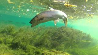 9d59f3c7d0c030aa6582acf50e839d06--fishing-tips-bass-fishing Bass Eats Lure In Ultra Clear Underwater Gopro Footage