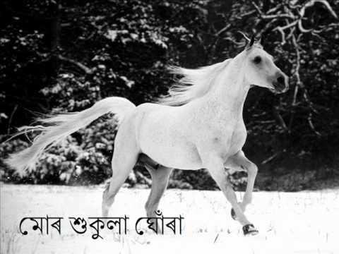 Mor Shukula Ghora মোৰ শুকুলা ঘোঁৰা